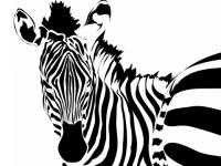 Zebra Sandra Engen (udsnit)