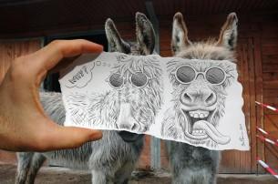 BenHeine_Donkey